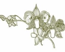 פרח קרב
