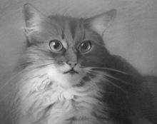 ציור רישום אמנות ידראלית חתול פורטרט