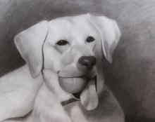 פורטרט כלב רישום בהזמנה אמנות ישראלית