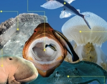 עיצוב מגזין צלילה לאייפד