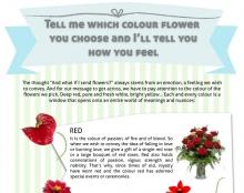 Floraqueen Infographic #3
