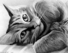 ציור רישום אמנות ישראלית חתול פורטרט