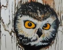 Owls//ינשופים