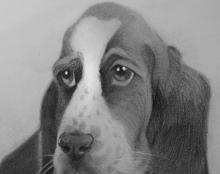 כלב ציור רישום אמנות ישראלית