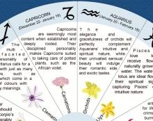 Flowers & Horoscope - Floraqueen Infographic #2